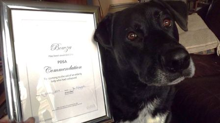 Bowza the dog with his PDSA award Picture: DON COX
