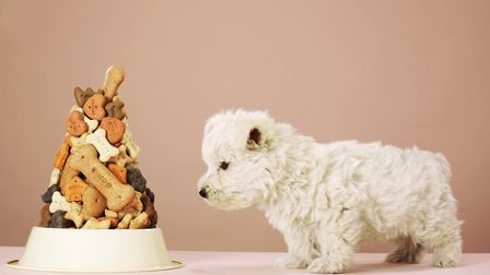 Dog biscuit day? Yes, there is one. Picture: Martin Poole/Getty Images