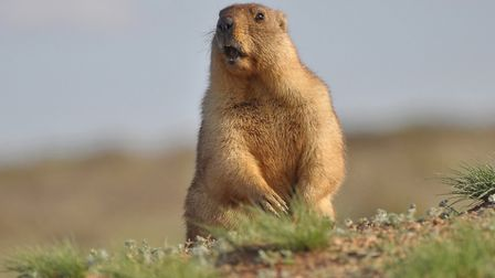 Groundhog Day - spring is on its way. Picture: Getty Images/iStockphoto