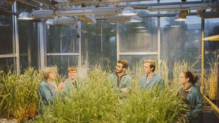 Plant biologists in the greenhouse at the University of Essex's School of Biological Sciences. Pict