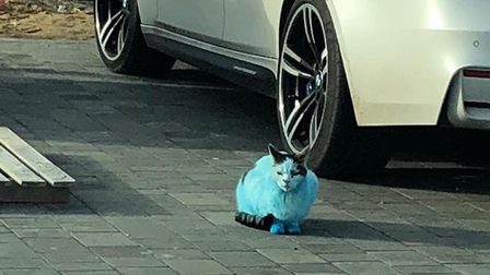 This cat was spotted entirely blue in Clacton. Picture: TERRY OLIVER