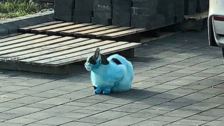 One cat was fuly covered in the blue ink. Picture: TERRY OLIVER