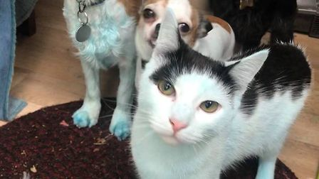 Chrissie Augrandjean who is a local dog walker, found a number of her clients pets to be tinged blue