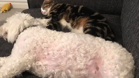 Tilly the dog is missing her naptime buddy Mollie Picture: MANDY BENNETT