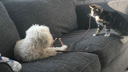 Mollie and Tilly playing together Picture: MANDY BENNETT