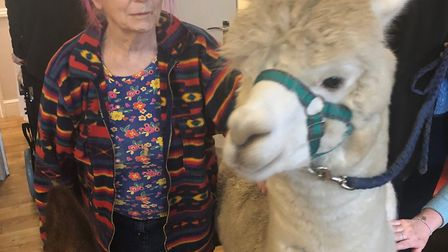 Violet Simpson with an alpaca at Hadleigh Nursing Home. Picture: KINGSLEY HEALTHCARE