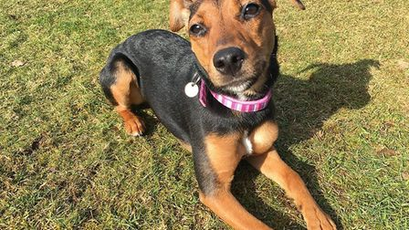 Millie is desperate for a new home