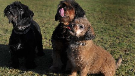 Lucy, Mitzi and Winnie need a home. Picture: SARAH LUCY BROWN