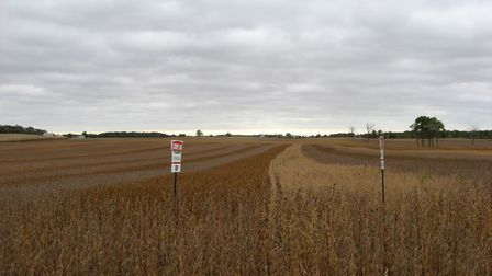 Soybeans crops being grown in the USA Picture: WIKIMEDIA