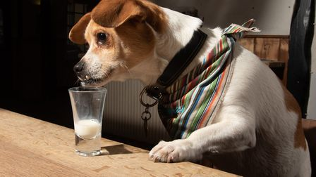 Lord Jefferey loves to pop in to The Castle Inn for a glass of milk Picture: SARAH LUCY BROWN