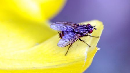 Some insects may seem annoying or irrelevant, but they are incredibly important, says Ben McFarland