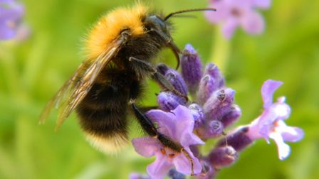 Insects ranging from butterflies and bees to dung beetles are all in decline