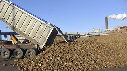 Sugar beet BEING delivered to the British Sugar factory in Bury St Edmunds Picture: SU ANDERSON
