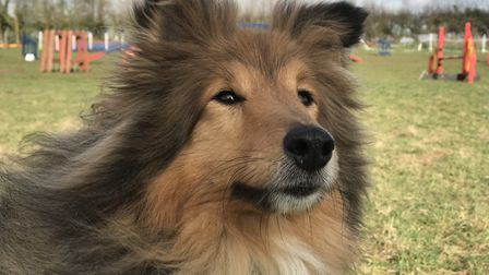 Dex which belongs to Jacqui's mother will also compete in this year's junior event Picture: NEIL DID