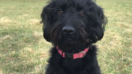 Brooke's dog Izzy Picture: NEIL DIDSBURY