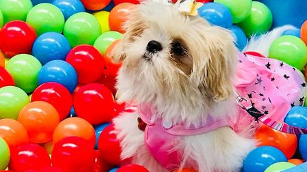 The laws on dog daycare are changing. Pictured here is a dog at Lowestoft Canine Creche Picture: CA