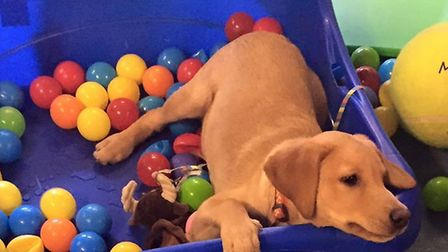 Canine Creche Group is introducing Puppy Club across Suffolk to help puppies socialise and become be
