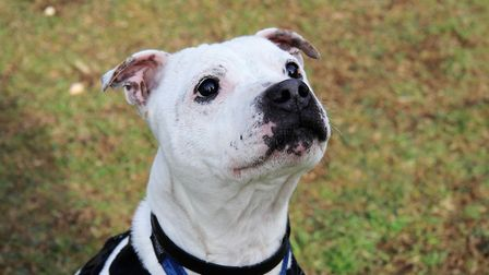 Six year old Bailey loves a cuddle with those he is comfortable with Picture: SUFFOLK RSPCA