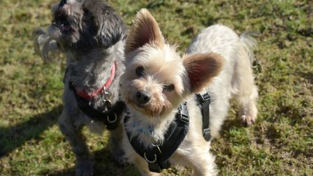 Milly and Harley are looking for a new forever home Picture: SARAH LUCY BROWN
