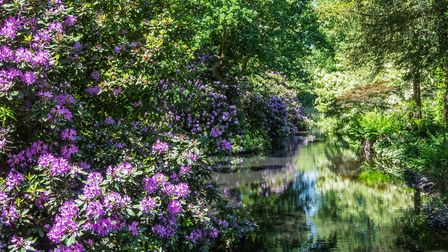 Visitors will get the chance to explore the stunning gardens Picture: MARK RIVERS