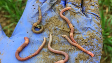 #60minworms project was the first comprehensive worm survey and was carried out by farmers Picture:
