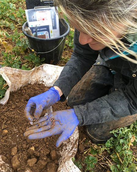Dr Jackie Stroud, a Natural Environment Research Council (NERC) Soil Security Fellow at Rothamsted