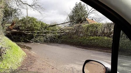 Kezza Clarke snapped this picture of a fallen tree in Chitts Hill, Colchester Picture: KEZZA CLARKE