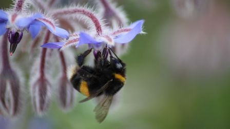 An innovative seed treatment for borage has been developed through a collaboration between Itaka Cro