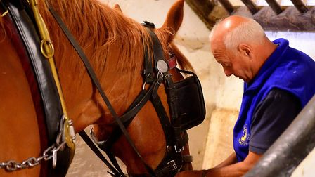 Gentle giant? Bruce Smith with a Suffolk Punch in 2015 Picture: SIMON PARKER