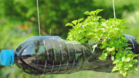 A plant growing out of a recycled plastic bottle Picture: Thinkstock/PA