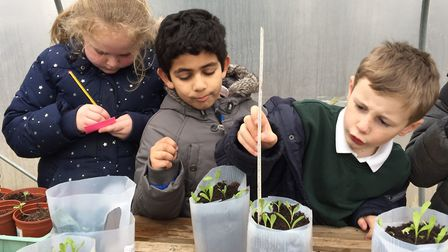 Schoolchildren planting in recycled containers Picture: Thinkstock/PA