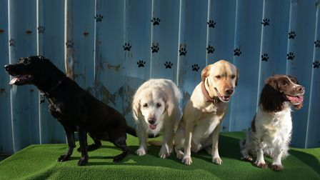 Dogs enjoying themselves at Honeyz Dog Day Care in Framlingham Picture: SARAH LUCY BROWN