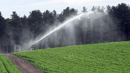 An East Anglian crop field being irrigated Picture: PHIL MORLEY