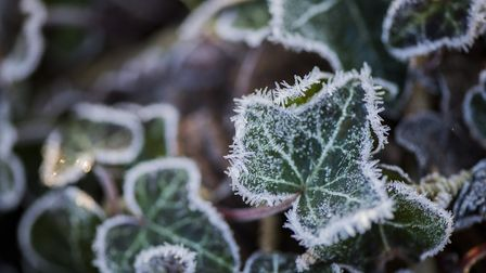 There have been some frosty mornings in Suffolk this week. Picture: MATTHEW USHER
