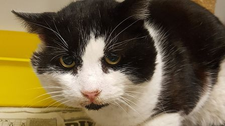 Kelvin is very wary of people since the incident. Picture: Wanderers Haven Animal Sanctuary
