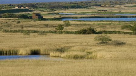 20,419 people made their voices heard in the Love Minsmere campaign, the RSPB's response to a public