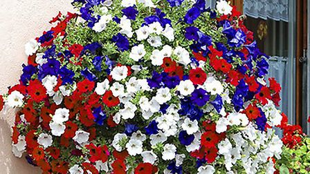 Fill your baskets with this Union Jack collection of petunias Picture: Enjoy Gardening More