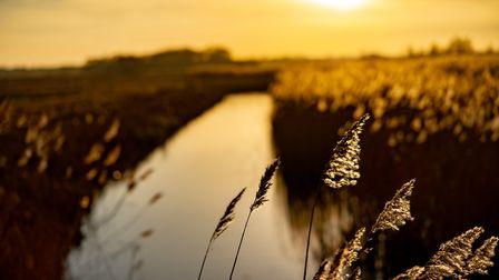 Sunset over Carlton Marshes - Suffolk Wildlife Trust is working to preserve both the landscape and t