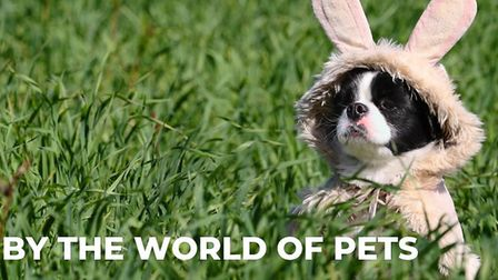 The World of Pets are hosting a dog easter egg hunt in Woodbridge, Suffolk. Picture: WORLD OF PETS