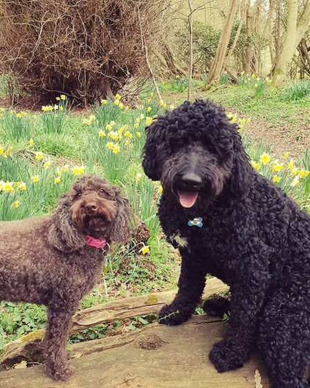 Two dogs enjoying the spring weather in Bredfield, Suffolk. Picture: SOPHIE POPE