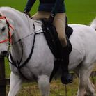 Missing horse Basil de Mulo has been found after people searched on the ground and rallied round on
