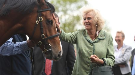 The Duchess of Cornwall pats a stallion named Rajasinghe during a visit to the National Stud in Newm