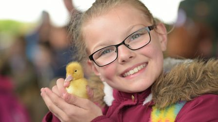 Eliza from Glemsford Primary School with a duckling Picture: SARAH LUCY BROWN