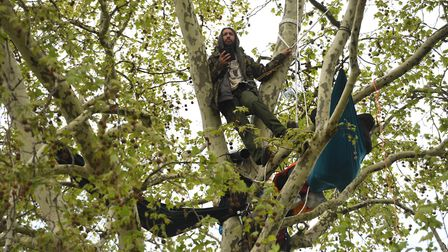 Climate activists in the trees in Parliament Square in Westminster, London. Picture: Stefan Rousseau