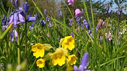 Colourful spring flowers Picture: STEVE COATES