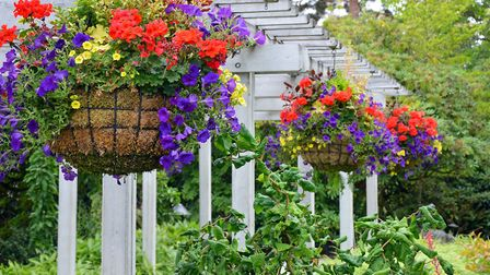 A display of hanging baskets. Picture: iStock/PA. .