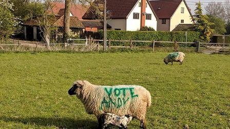 The Green sheep at Cotton are one of the few signs there is an election on this year. Picture: ANDY