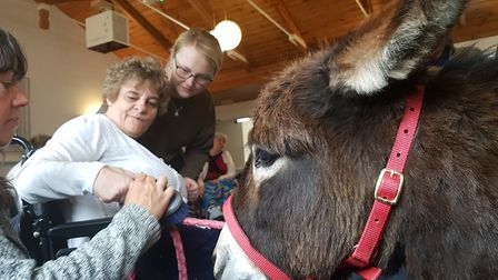 The Miniature Donkeys for Wellbeing travel across Suffolk bringing relaxation therapy to care homes
