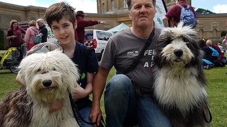 Participants in the Great British Dog Walk at Ickworth Park Picture: RACHEL EDGE