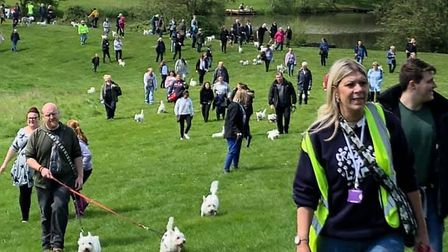 Over 70 westies met up in Colchester to raise money for charity this weekend Picture: TERRY PETTITT